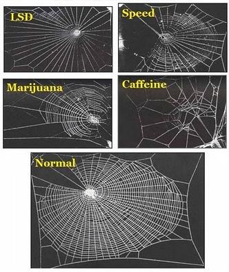 Spinneweb onder invloed van drugs (experiment NASA)