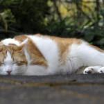 De wetenschap achter dutjes (en waarom ze zo goed voor je zijn)