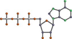 ATP molecuul