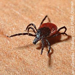 De kosten van vermoeidheidsziekte Lyme