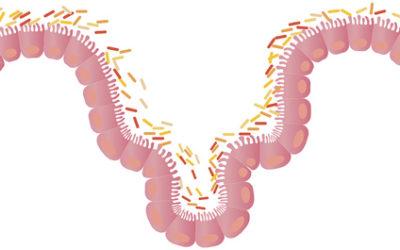 Verband tussen het Chronisch Vermoeidheids Syndroom en je darmbacterien