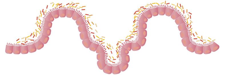 Microbioom en Chronisch Vermoeidheids Syndroom